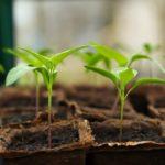 『仕事で成長しないと感じたとき』グングン成長する人が大切にする3つの意識